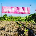 Los Huertos Solidarios de la Fundación Soliss reanudan la producción de alimentos