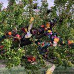 El ecuador del regional de colombicultura llega con ocho palomos empatados en cabeza